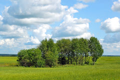 Summer green meadow. And wood Royalty Free Stock Photo