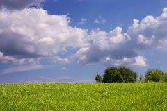 The summer green meadow Royalty Free Stock Photos