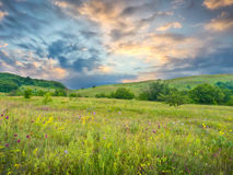 Summer green meadow Royalty Free Stock Image
