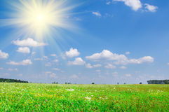 Summer green meadow. And cloudy blue sky stock images
