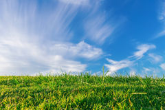 Summer green meadow grass and blue sky. Stock Photo