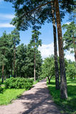 Summer green Park. Sosnovka Leningrad Royalty Free Stock Image