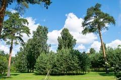 Summer green Park. Sosnovka Leningrad Stock Image