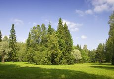 Summer green trees Stock Image