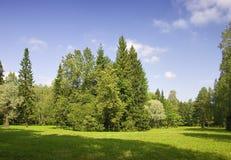 Summer green trees Stock Image
