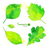 Summer green watercolor painted foliage set Stock Photography