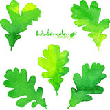 Summer green watercolor painted foliage set Royalty Free Stock Images
