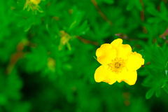 Summer: green and yellow Stock Photos