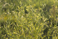 Summer Greenery. In a field stock image