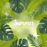 Summer greeting card, invitation. Frame made of hand drawn tropical palm, banana and monstera leaves. Engraving design Royalty Free Stock Photos