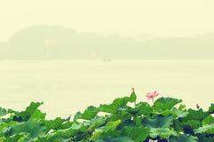 Summer, hangzhou west lake lotus in full bloom Royalty Free Stock Photography