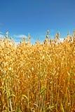 Summer before harvest Stock Photos