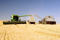 Summer Harvest in Action. Two Combines Emptying Graing into A Truck Stock Image