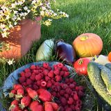 Harvested varied summer harvest on the grass stock photography