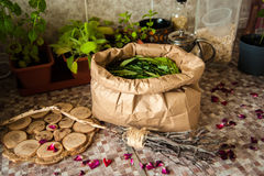 Summer harvest. Broom with burned runes on it and the paper bag full of leaves of ivan tea Royalty Free Stock Photo