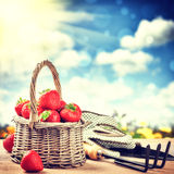Summer harvest of fresh strawberries Stock Photos