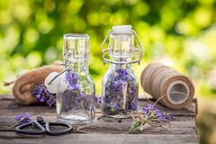 Summer harvest of lavender in small bottles. On wooden table royalty free stock images