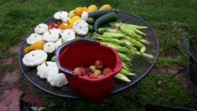 Summer harvest. From our garden Stock Image