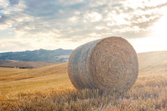 Summer harvest on the Tuscan fields, Italy Royalty Free Stock Photo