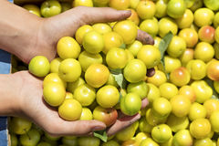 Summer harvest of yellow ripe plums in a box and a handful in hands Stock Photo