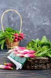 Summer harvested red radish. Growing organic vegetables. Large bunch of raw fresh juicy garden radish in the basket on wooden background ready to eat. Closeup Royalty Free Stock Photos