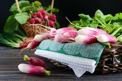 Summer harvested red radish. Growing organic vegetables. Large bunch of raw fresh juicy garden radish in the basket on wooden background ready to eat. Closeup Royalty Free Stock Photo