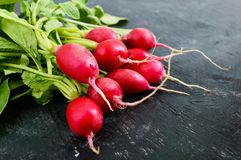 Summer harvested red radish. Growing organic vegetables. Large bunch of raw fresh juicy garden radish. On dark boards ready to eat. Closeup Royalty Free Stock Photo
