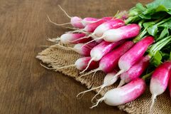 Summer harvested red radish. Growing organic vegetables. Large bunch of raw fresh juicy garden radish. On wooden background ready to eat. Closeup Royalty Free Stock Photo