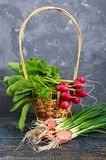 Summer harvested red radish. Growing organic vegetables. Large bunch of raw fresh juicy garden radish in the basket and green onions on wooden background ready Royalty Free Stock Images
