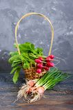Summer harvested red radish. Growing organic vegetables. Large bunch of raw fresh juicy garden radish in the basket and green onions on wooden background ready Stock Image