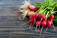Summer harvested red radish and onions. Growing organic vegetables. Large bunches of raw fresh juicy garden radish and green young onions on dark boards ready Royalty Free Stock Image