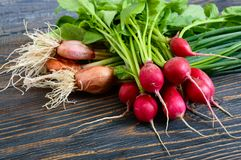 Summer harvested red radish and onions. Growing organic vegetables. Large bunches of raw fresh juicy garden radish and green young onions on dark boards ready Royalty Free Stock Photos