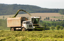 Summer harvesting Royalty Free Stock Image