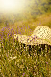 Summer hat over lavender Royalty Free Stock Photos