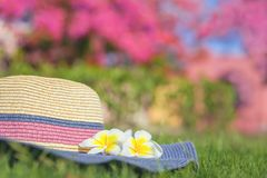 Summer hat with plumeria flowers on grass stock image