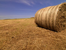 Summer hay bales Royalty Free Stock Photo
