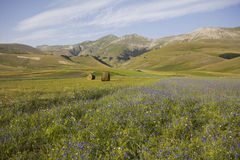 Summer hay balls in the italian mountain Royalty Free Stock Image