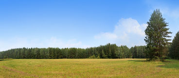 Summer hayfield landscape. Summer hayfield and forest landscape panorama Royalty Free Stock Photography