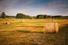 Summer haystacks Stock Photo