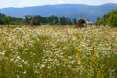 Summer, haystacks and mountains Royalty Free Stock Photo