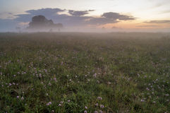 Summer, hazy meadow in the moonlight Stock Photo