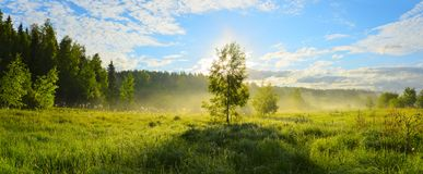 Sunny panorama of foggy lawn with lonely growing birch tree on a background of sunrise sky. stock photography