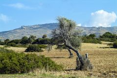 Summer heat burns the landscape in southern Cyprus. Summer heat is fierce on the southern coast of the Mediterranean island of Cyprus. Consequently the landscape royalty free stock photos