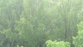 Summer heavy rain in city. Top view on green trees and pouring rain. 4K video