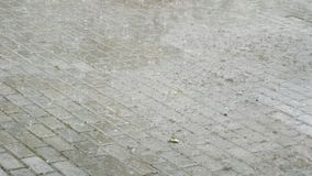 Summer heavy rain with hail. Raindrops fall on the flooded road. Big raindrops. Autumn raindrops fall into a large stock video footage