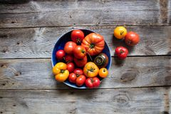 Summer heirloom and beefsteak tomatoes on beautiful genuine wooden table. Different variety of summer heirloom and beefsteak tomatoes on beautiful genuine wooden Stock Photos