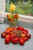 Summer heirloom vegetables and flowers on counter by a window. Colorful heirloom organic tomatoes and shallots in front of a vase of sunflower blooms and Royalty Free Stock Photography