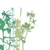 Summer herbals background Stock Photography