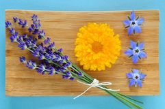Summer herbs and edible flowers on wooden plate. Summer herbs and edible flowers on wooden plate on blue background. Lavender (Lavandula), marigold (Calendula Royalty Free Stock Photos