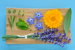 Summer herbs and edible flowers on wooden plate. Summer herbs and edible flowers on wooden plate on blue background. Thyme, Rosemary, Mint, borage (borago) stock photo